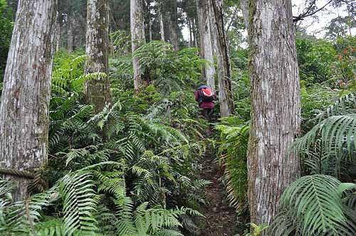 啦卡登山步道后段陡峭(图片提供:tony)