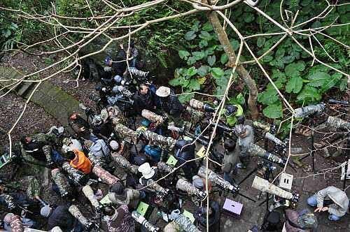乌来瀑布公园蛙之谷,鸟友们架大炮相机等候鸟儿现踪。 (图片提供:tony)