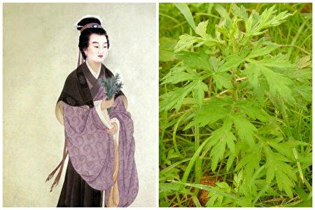 艾草是医病良药,而史料有载的第一位用艾叶治病的神医,恰是鲍姑。(大纪元合成图)