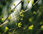 立春在即新年伊始 大地解冻东风送暖