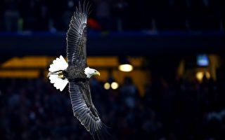 白头鹰是美国的国鸟,受联邦法律保护。(Jamie Squire/Getty Images)