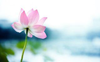 唐代高僧黄檗希运是位很有成就的著名禅师,为禅宗五大宗之一的临济宗祖师临济义玄的师父,他的著名诗句千古留芳。(Fotolia)