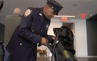 比利时恐袭后 纽约警方新增8只警犬防恐