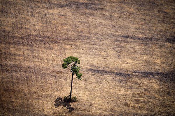 美國密西根州大學研究者3月18日說,中國森林在遭到幾十年的砍伐之後,開始重現勃勃生機,但是通過大量進口木材,森林退化的問題可能已經轉移到其他國家。(RAPHAEL ALVES/AFP/Getty Images)
