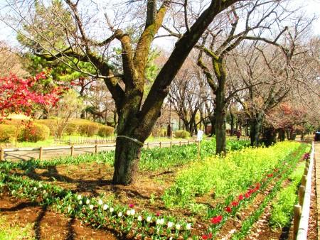 郁金香花圃。(容乃加/大纪元)