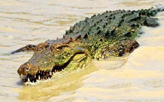鳄鱼口中救夫  纳米比亚勇妻为爱拼命
