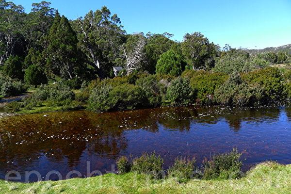 搖籃山附近Ronny小溪,據說水裡有礦物質,水呈紅色。(華苜/大紀元)