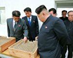 """朝鲜的所有成年人都被要求佩戴金日成或者他的儿子金正日肖像的徽章,作为他们对""""领袖""""忠诚的表示。(KCNA VIA KNS/AFP)"""