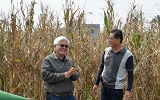 活化農地 雲林加碼補助種植硬質玉米