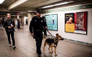"""纽约市3月23日举行一组""""警犬""""结业典礼,这群警犬可以闻移动物体散发出来的炸药轻烟,提升纽约市打击自杀式炸弹恐怖袭击的能力。图为去年11月巴黎恐攻后,纽约市警察带着警犬在地铁执行勤务。 (Photo by Andrew Renneisen/Getty Images)"""