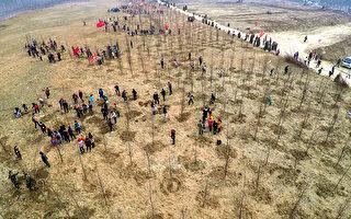 2016年3月12日植树节,山东日照5万人植树。(Photo by ChinaFotoPress/ChinaFotoPress via Getty Images)