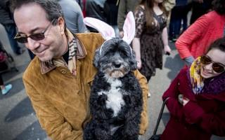 3月27日,紐約復活節大遊行登場,民眾以絢麗裝扮走上第五大道,許多人戴著兔子花朵為主題的誇張頭飾,連毛小孩也盛裝出席。  (Eric Thayer/Getty Images)