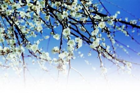 「數點梅花天地春」一句是畫龍點睛之筆,全詩的題目即來自這裡,所以叫《梅花詩》。(大紀元資料圖)
