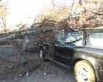 三輛車被大樹砸到,壓在樹底。(鐘鳴/大紀元)