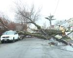 倒下的大樹不只砸到車輛,還扯斷了數根電纜。(唐誠/大紀元)