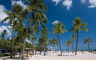 禁止非必要旅行 亚省近3,000名游客去夏威夷