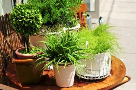 有后院的生活,算得上一种自然的生活,一种心灵的生活。(fotolia)