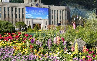 組圖:春遊韓國 繽紛花海風情萬種
