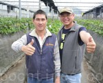 陈新豪(右)与陈祈华(左)以自行研发的监测系统,来种植有机无毒的草莓。(赖瑞/大纪元)