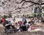 每年的櫻花時節,一期一會,櫻花樹下,人流如潮。攝於東京的新宿御園。(盧勇/大紀元)