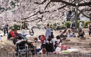 每年的樱花时节,一期一会,樱花树下,人流如潮。摄于东京的新宿御园。(卢勇/大纪元)