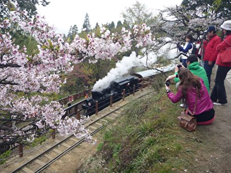 台铁3日表示,为了反映成本,阿里山小火车票价将于5月1日起大幅调涨,大约贵五成到1倍。(李撷璎/大纪元)