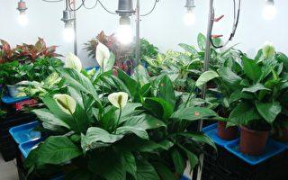 選對室內植物淨化空氣 這6種好熱門