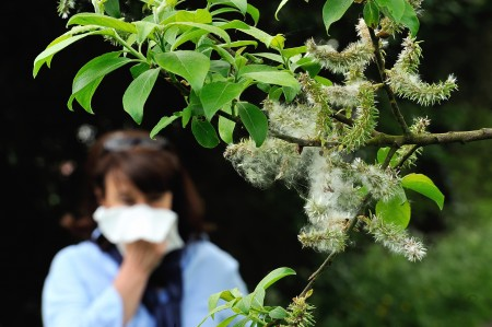 花粉过敏让人苦不堪言。 (PHILIPPE HUGUEN/AFP/Getty Images)