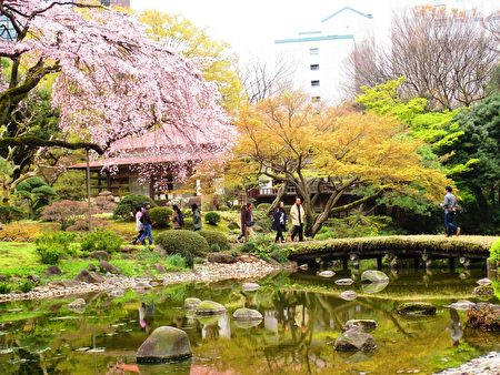 小石川后乐园涵融中国文化,珍贵的日本文化历史名园。(容乃加/大纪元)