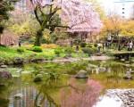 组图:美妙樱花情涵中国文化 江户名园胜采