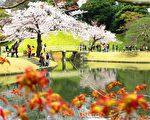 日本东京小石川后乐园清明节前后樱花盛开。(容乃加/大纪元)