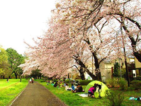 """带着轻便帐篷""""花见"""",樱花木下小憩。4月3日适逢星期日,东京野川公园里的草地上、川边的樱花木下,散布着""""花见""""和春游踏青嬉戏人群。满园樱花开盛,一片清明爽朗之气报告春满天地的消息。(容乃加/大纪元)(容乃加/大纪元)"""