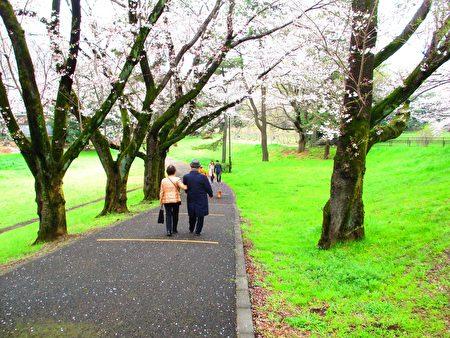 天地清明,春暖野川公园,男女老少共春光。(容乃加/大纪元)