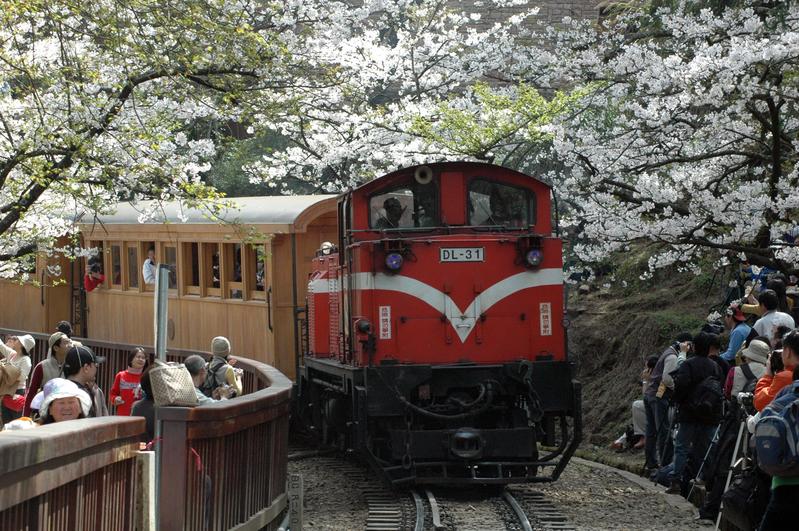 満開の桜の下を通る阿里山の鉄道 (大紀元)