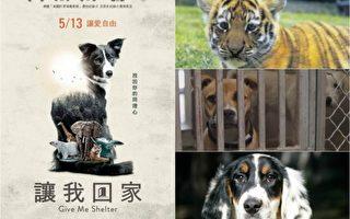 好莱坞电影《让我回家》真实的记录了全球性的动物议题,发人深省。(华影国际影艺/大纪元合成)