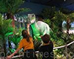 西澳科技館(Scitech)將可能搬到北橋區的珀斯文化中心(Perth Cultural Centre)。圖為科技館5月開始的探索恐龍主題展。(高敏/大紀元)