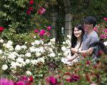 首尔大公园玫瑰花盛开。(全景林/大纪元)