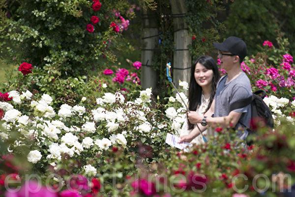 首爾大公園玫瑰花節浪漫登場