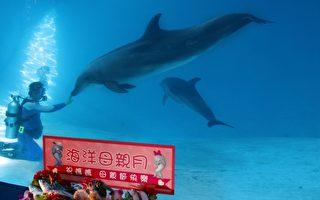 温馨母亲月,海洋公园海豚妈妈宝妹,带着小海豚,由保育员、兽医精心设计搭配,让宝妹吃的开心、健康。(詹亦菱/大纪元)