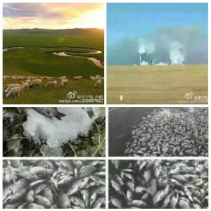 內蒙古呼倫貝爾的莫日格勒河被污染,導致大量魚死亡漂浮在河面。(網絡圖片)