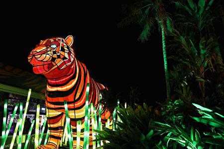 悉尼塔龙加動物園(Taronga Zoo)為2016活力悉尼燈光音樂節設計的動物造型的燈。 (Photo by Cameron Spencer/Getty Images)