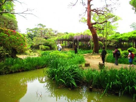 """""""牛岛之藤""""古典的日本庭院。(可容/大纪元)"""