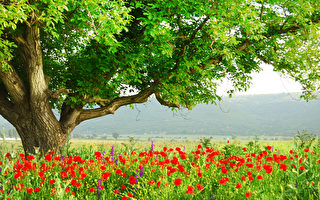 研究:看樹可紓壓 樹木越茂密效果越好