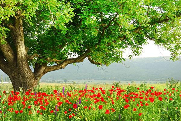 美國伊利諾大學的研究表示,觀看樹木可降低心理壓力,樹木越多,效果越好。(Fotolia)