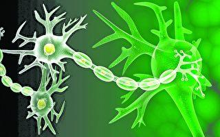 生命是由無數充滿奧秘的細胞組成,而細胞不可能是各種分子隨機組合的概率產物。(Fotolia)