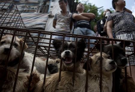 玉林摊贩站在狗笼前等顾客上门。(STR / AFP)