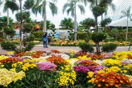 """马来西亚年度花卉盛会""""2016年布城皇家花卉园艺节""""在布城第四区隆重举行。菊花被选定为今年的主题花。 (杨晓慧/大纪元)"""