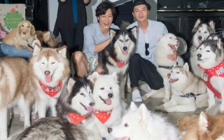 """薛仕凌(后左)与古斌为宣传新偶像剧《狼王子》,在昆凌的店举办""""哈士奇力挺狼王子""""活动。(台视、三立提供)"""