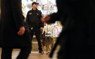 一只工作中的纽约警犬。 (Mario Tama/Getty Images)