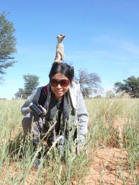 溫芳玲深入南非喀拉哈里沙漠,用鏡頭記錄狐獴家族。(溫芳玲提供)